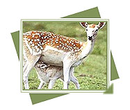 Chail Sanctuary, Wildlife of Chail Sanctuary, Travel to Chail Sanctuary, Animals wildlife and heritage of Himachal Pradesh