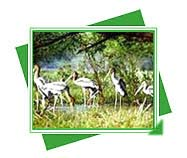 Keoladeo National Park, Travel to Keoladeo National Park, Animals wildlife and heritage of Rajasthan, Wildlife